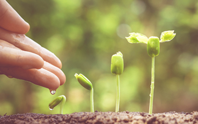 Curiosity opens up leadership possibilities